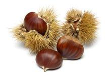 Free Chestnut Stock Photos - 37731033