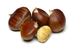 Free Chestnut Stock Photo - 37731140