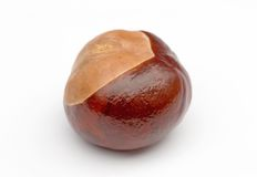 Chestnut. A chestnut isolated on white royalty free stock image