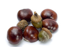 Chestnut & acorn. Chestnut and acorn on white Royalty Free Stock Image
