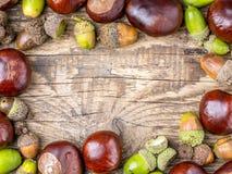 Chestnut and acorn framework Royalty Free Stock Photo