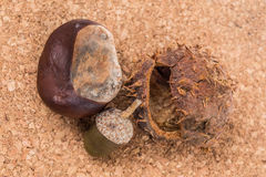 Chestnut and acorn Royalty Free Stock Image