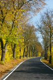 Chestnut alley in autumn royalty free stock image