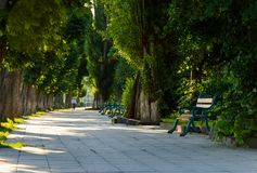 Chestnut alley with benches in summertime. Beautiful urban scenery in the morning stock photos