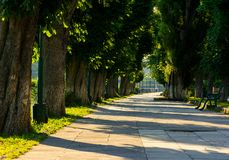 Chestnut alley with benches in summertime. Beautiful urban scenery in the morning Royalty Free Stock Photo