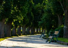 Chestnut alley with benches in summertime. Beautiful urban scenery in the morning stock image