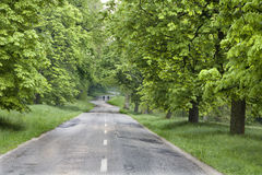 Chestnut alley after rain Royalty Free Stock Image