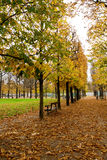Chestnut alleys in Paris Royalty Free Stock Image