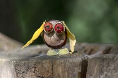 Chestnut animal on wooden stump, owl made of chestnut, acorn, yellow leaves and red hawthorn fruits, funny bird. Chestnut animal on wooden stump, owl made of stock images