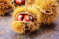 Chestnut. Arrangement beautiful autumn nuts Stock Photo