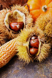 Chestnut. Arrangement beautiful autumn nuts Stock Photography