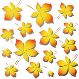 Chestnut autumn leaves Stock Images