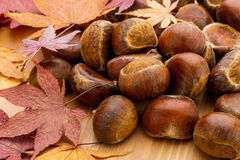 Chestnut and autumn maple Stock Image