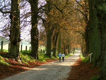 Chestnut Avenue. A chestnut avanue in eastern Germany Royalty Free Stock Photos