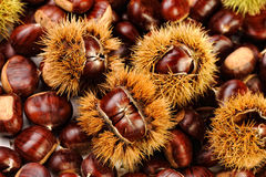 Chestnut background Stock Photos