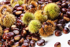 Chestnut background Stock Images