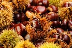Chestnut background Stock Image
