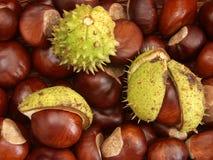 Chestnut background Stock Photography
