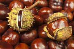 Chestnut background Royalty Free Stock Photography