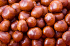 Chestnut background. Autumn chestnut background. Vibrant cheerful colors, very decorative Royalty Free Stock Photo