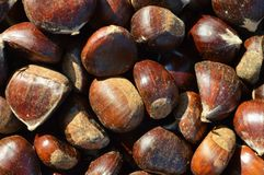 Chestnut background Royalty Free Stock Image