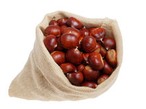 Chestnut bag. Freshly harvested fruits of autumn forest Royalty Free Stock Images
