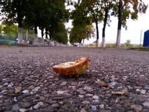 Chestnut bark Stock Photography