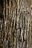 Chestnut bark Royalty Free Stock Photography