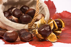 Chestnut in basket with leaves Stock Images