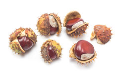 Chestnut berries Royalty Free Stock Images