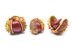 Chestnut berries Stock Photo