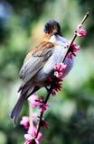 Chestnut bird in flowers Stock Image