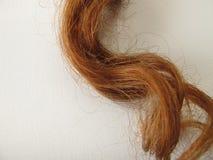Chestnut-brown hair strand. Pretty chestnut-brown hair strand royalty free stock photo