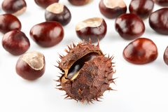 Chestnut with brown thorny peel and many peeled horse-chestnuts. On white background royalty free stock photos