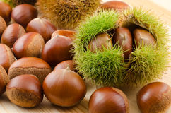 Chestnut bur and nuts Stock Photography