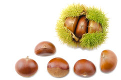Chestnut bur and nuts Royalty Free Stock Photos