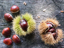 Chestnut and burr Stock Photo