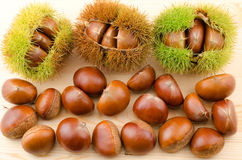 Chestnut burs and nuts Royalty Free Stock Photo