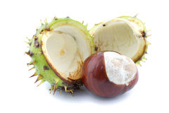 Chestnut and chestnut burr. Isolated on white stock images