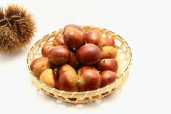 Chestnut. Curly and brown s Stock Image