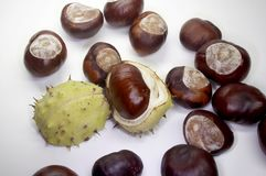 Chestnut. With shell  on white Royalty Free Stock Images