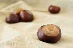 Chestnut close-up on beige cloth. Selective focus Royalty Free Stock Photos