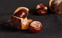 Chestnut close up on Stock Image