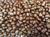 Chestnut close up shoot. Chestnut close up shoot for texture and background Stock Photography