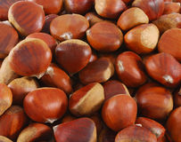 Chestnut closeup. A close up of chestnut (maroni). Can be used as background Royalty Free Stock Photos