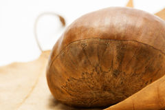 Chestnut (closeup on left). Chestnut macro (closeup on left Royalty Free Stock Photos