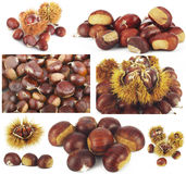 Chestnut colage Royalty Free Stock Images
