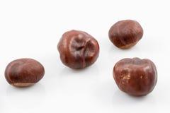 Chestnut core isolated on white Stock Photo