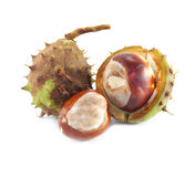 Chestnut with crust Royalty Free Stock Photography