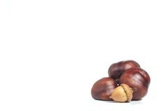 Chestnut with crust and acorn on a white Stock Photo